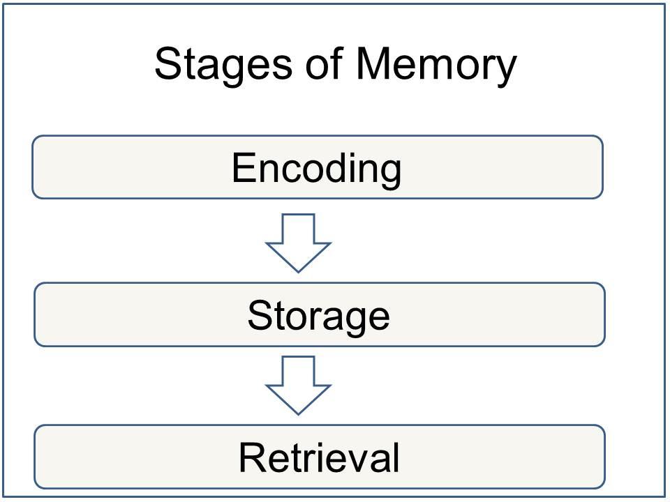 Memory Definition Psychology
