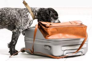 can drug dogs smell hemp oil